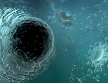 Mitochondriën (fragment) (animatie)